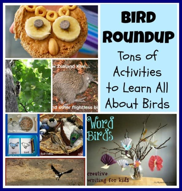 learnaboutbirds