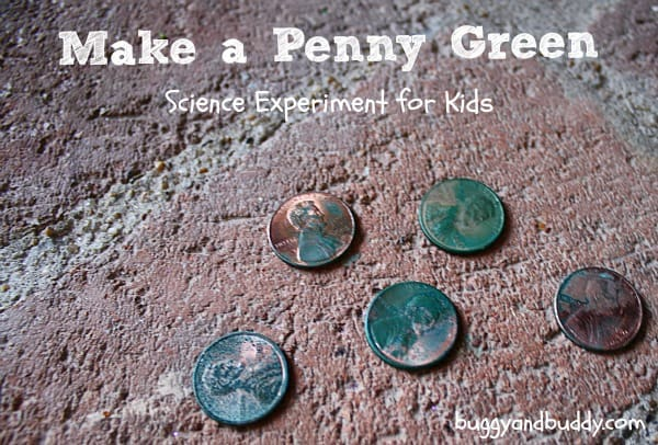 make a penny green science experiment for kids