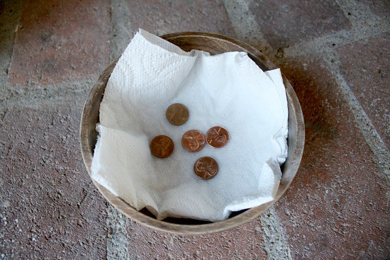 Pennies with vinegar ready to be observed