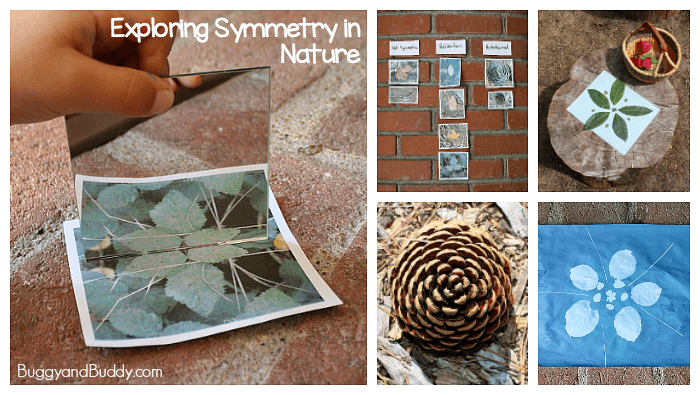 Drawing Lines Of Symmetry Ks : Finding symmetry in nature outdoor math activity for kids