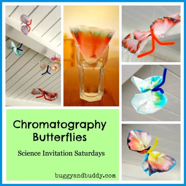 Chromatography Butterfly Science Experiment for Kids~ Buggy and Buddy