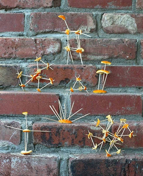 Building with Toothpicks and Orange Peels~ Buggy and Buddy