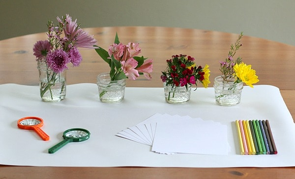 flower exploration center sensory science and art for