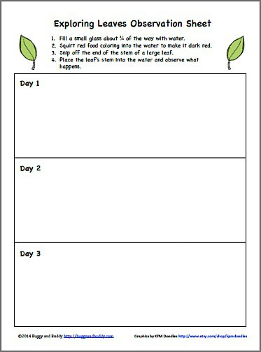 photo regarding Celery Experiment Printable Worksheet called Science for Youngsters: Studying How Drinking water Travels During Leaves