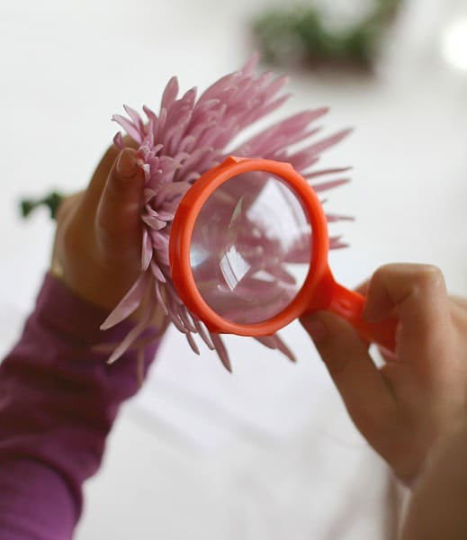 exploring flowers with a magnifying glass
