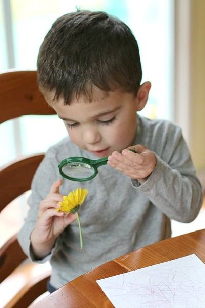 toddler using magnifying glass to learn about flowers