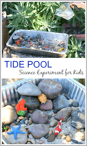 Tide Pool Experiment for Kids (& a fun ocean themed sensory bin when you're done!)~ Buggy and Buddy