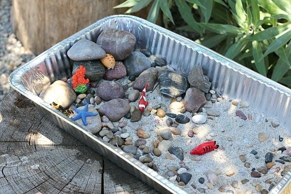 Tide Pool Science Exploration for Kids