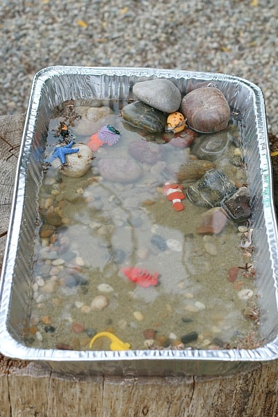 Tide Pool Science Experiment For Kids Buggy And Buddy