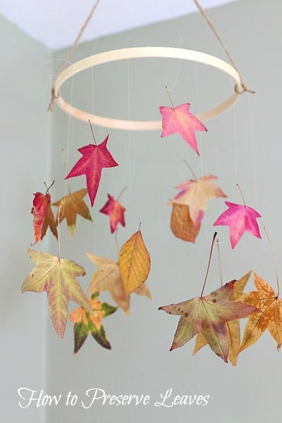 How To Preserve Leaves Fun Fall Craft For Kids Buggy And
