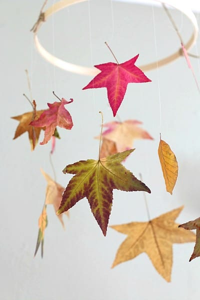 How to Preserve Leaves (with glycerin and waxed paper)