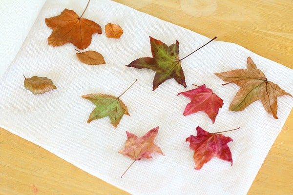 wax paper leaves I then placed a large leaf or multiple small leaves on top of the first sheet of wax paper then i carefully pressed another sheet of wax paper.