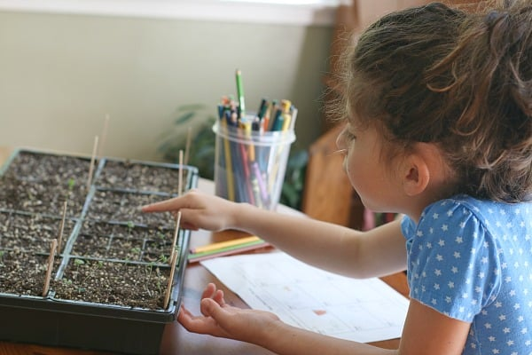 Gardening with Kids: Seed Sprouting with Free Printable Plant Journal