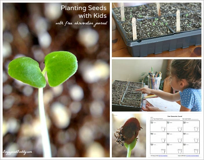 Spring Science Activities: Growing Seeds with Kids (with FREE recording sheet)