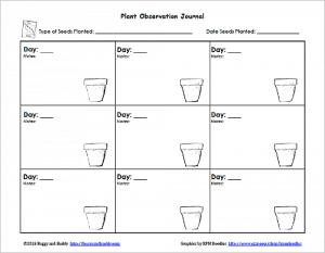 free printable sprout observation sheet for kids