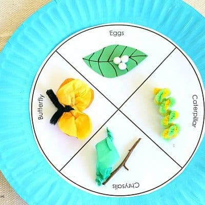 Butterfly Life Cycle Paper Plate Craft