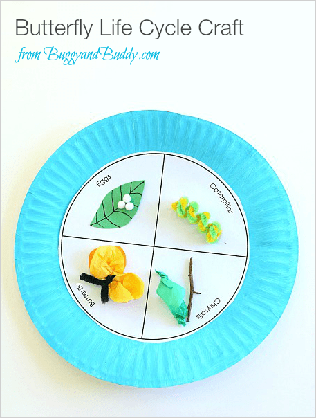 Butterfly Life Cycle Paper Plate Craft Buggy And Buddy