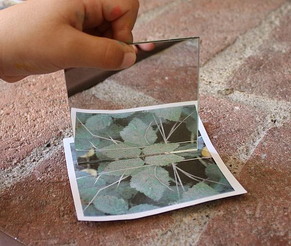 outdoor activities for kids: looking for symmetry in nature
