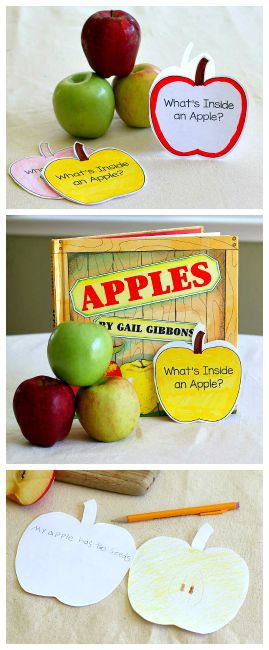 Apple Science for Kids: Exploring the Inside of an Apple ~ BuggyandBuddy.com