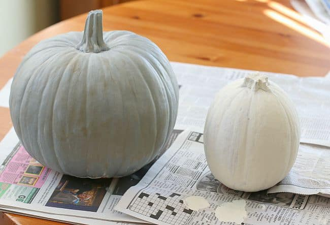 paint your pumpkins to match the characters in Possum Magic