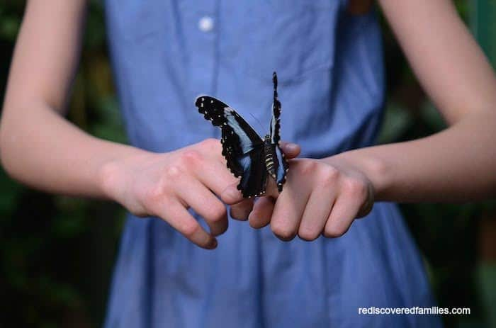 Butterfly Activities for Kids